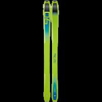 Green--cactus/ sparta_5312